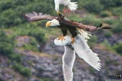حیوانات فداکار و شجاع