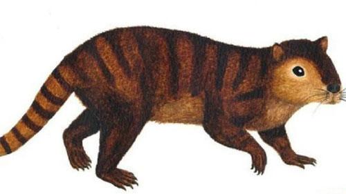 تنها موجود باقیمانده از نسل دایناسورها , علمی ودانستنی ها