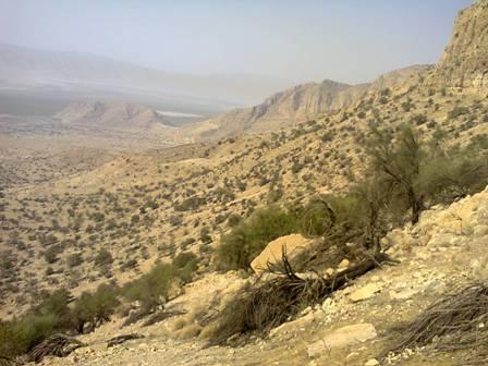 طبیعت زاگرس /خشک شدن درختان بادام کوهی /شمال دریاچه پریشان