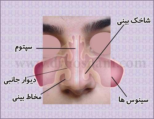 جراحی بینی دکتر حسنانی - اجزای داخلی بینی