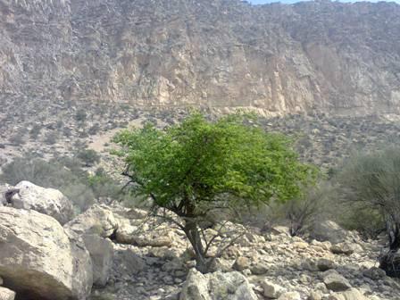 طبیعت پاییزی /ارتفاعات شمالی دهپاگاه/حومه کازرون /مهر94