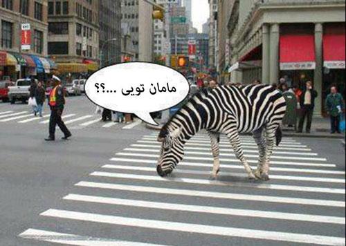 دانلود رایگان عکسهای خنده دار حیوانات