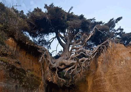درختی بین زمین وآسمان+عکس , تصاویر دیدنی