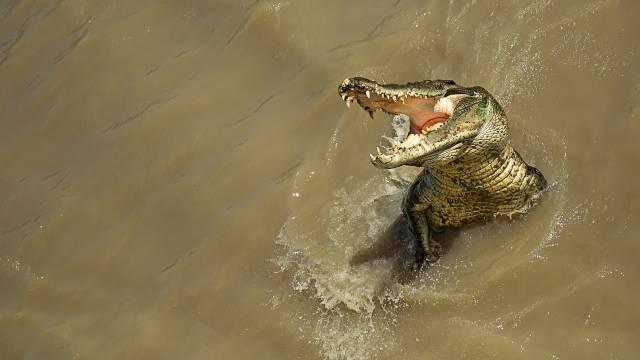 تصاویر تمساح