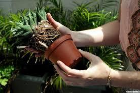 گیاه ساکولنت چیست و چه ویژگی هایی دارد ؟