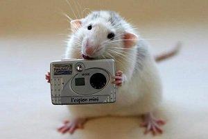 سر موش درساندویچ مک دونالد !! , اخبار گوناگون