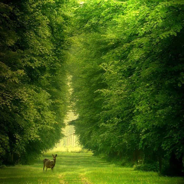 دانلود رایگان عکسهایی از طبیعت زیبای ایران