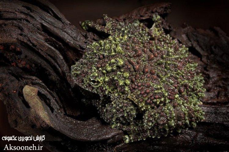 عکس های عجیب از نمای نزدیک حشرات