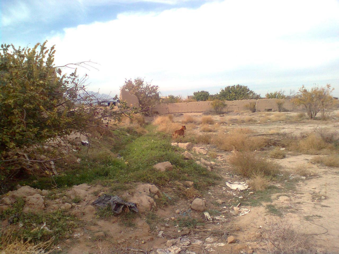 محله پاچنار --حضور سگهای هار بعد از اقدام ناموثر شهرداری