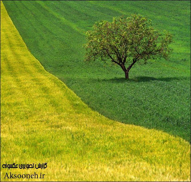 عکس های جذاب از مزارع زیبا
