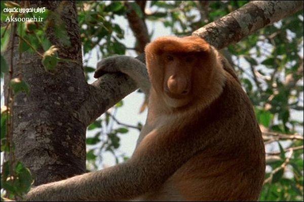 عکس های زیبا از 10 جانور عجیب دنیا