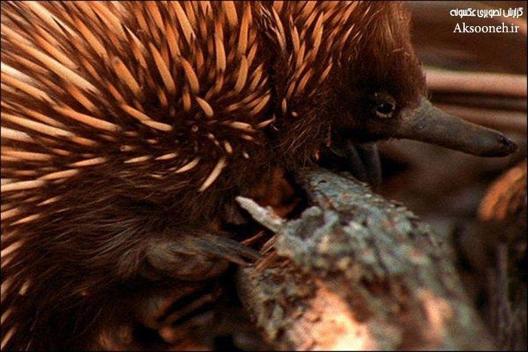 تصاویر دیدنی از 10 جانور عجیب دنیا
