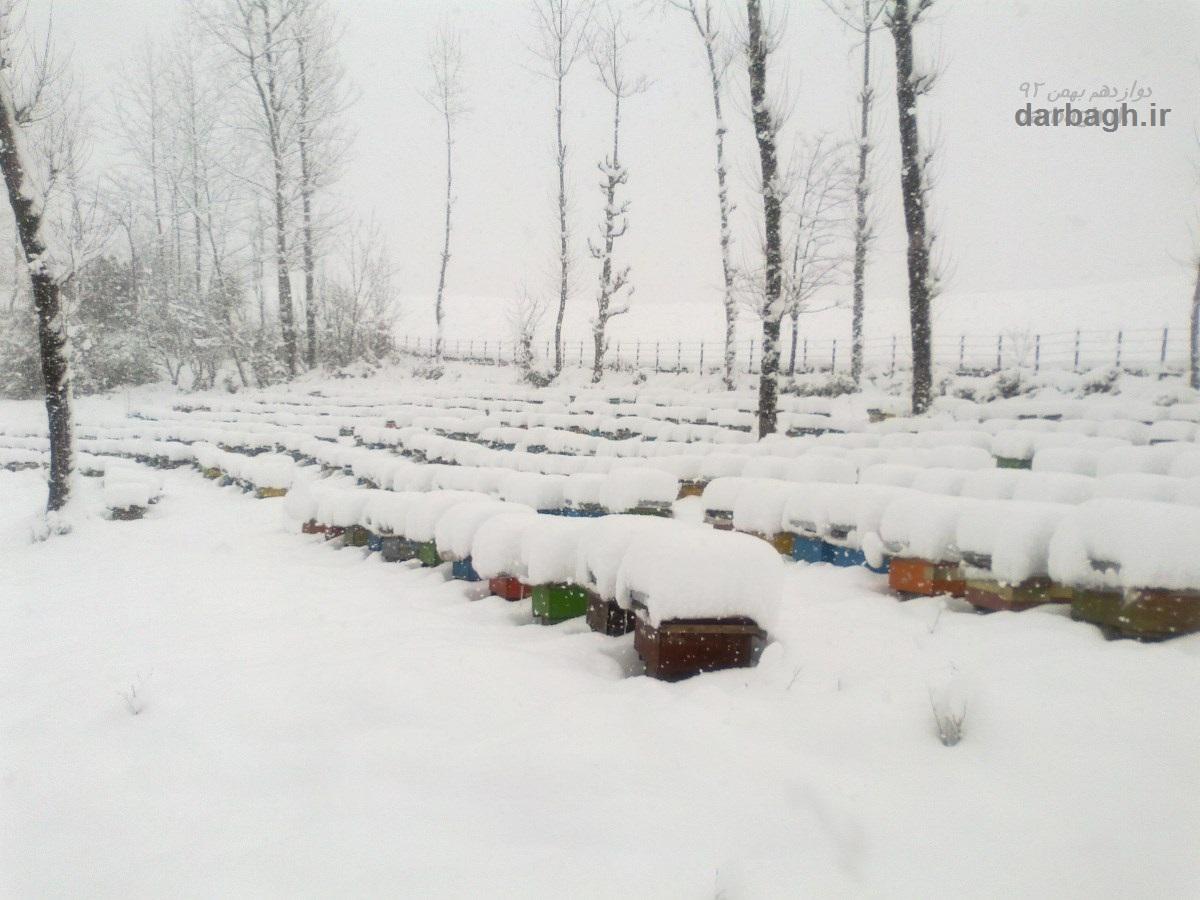 barf darbagh ir 12 7  برف دارباغ 12 بهمن 92