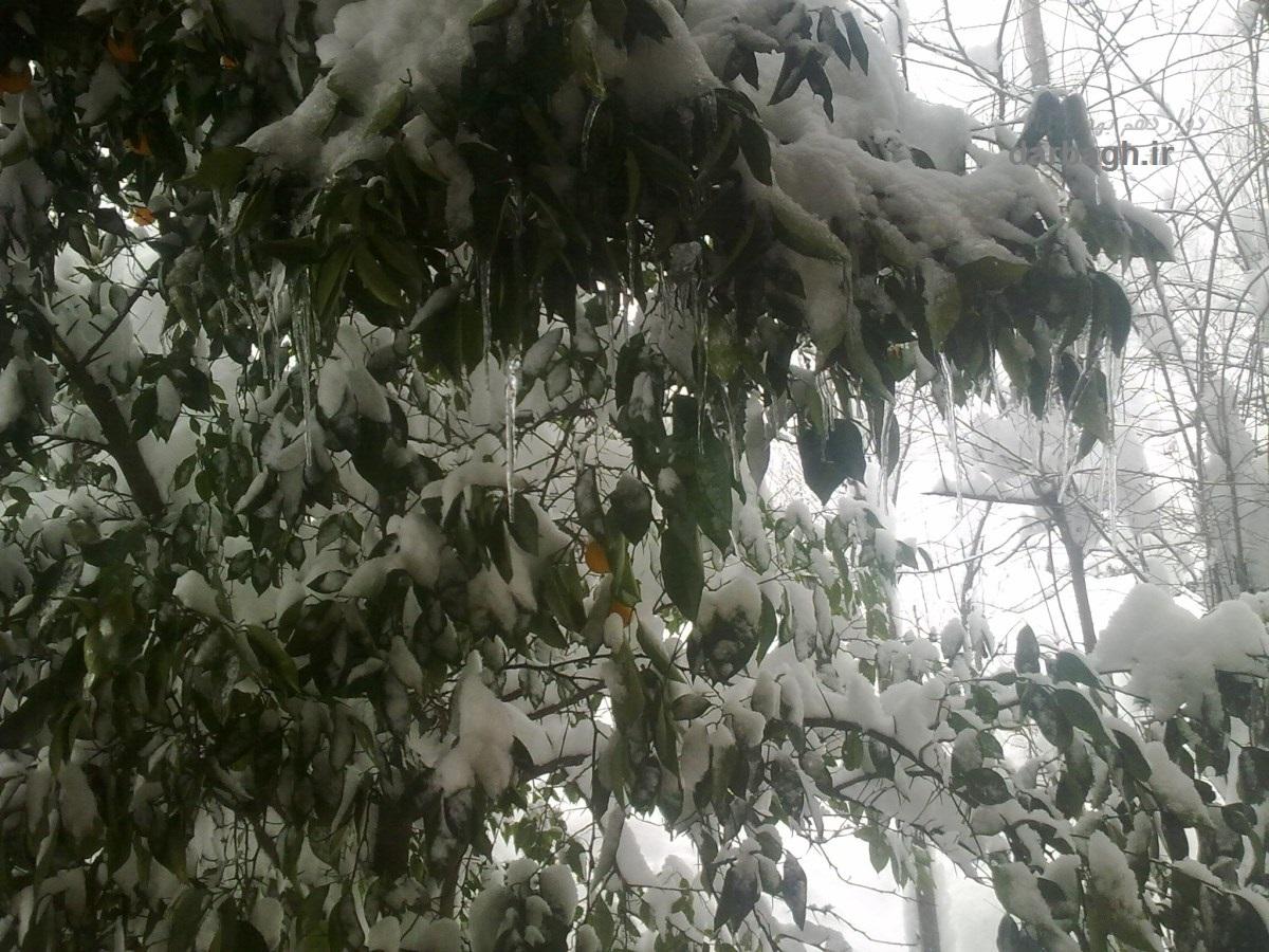 barf darbagh ir 12 31  برف دارباغ 12 بهمن 92