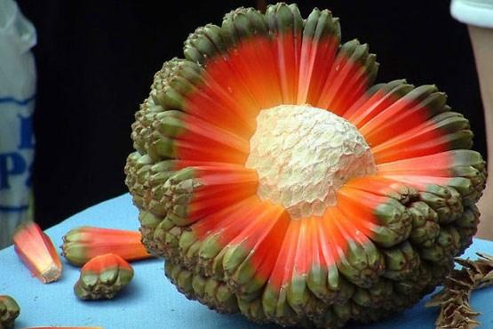 میوه ای عجیب اما زیبا + عکس , جالب وخواندنی