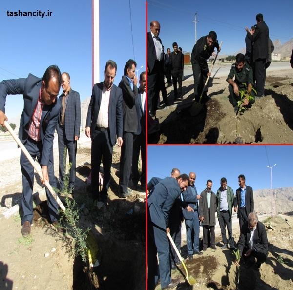 کاشت درخت بلوار ورودی شهر تشان