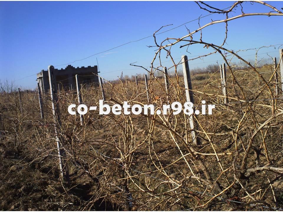 نمونه های اجرا شده داربست باغ انگور اسفرورین