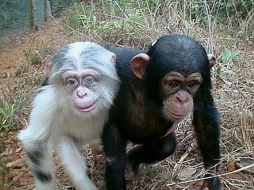 دانلود پاورپوینت بررسی میمون از نطر نژاد تغذیه و طبقه بندی علمی
