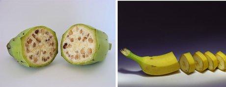 تغییر شکل و شمایل میوهها در طول زمان , علمی ودانستنی ها