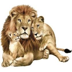 چرا شیر سلطان جنگله؟