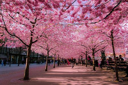 تصاویری از زیباترین پیاده روها در جهان