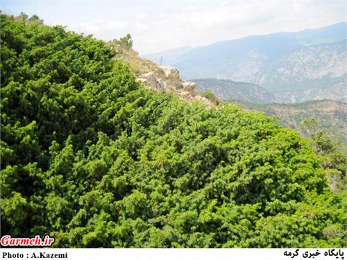 ییلاقات روستای دشت گردشگران را شگفتزده میکند / تصاویر