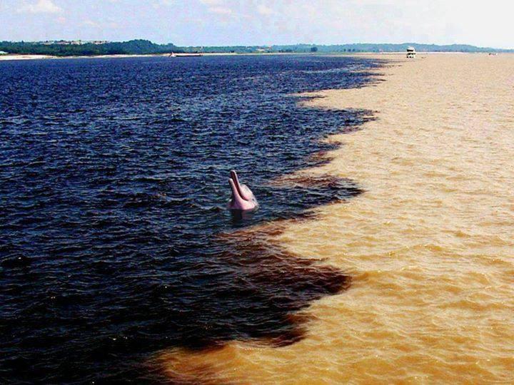 وقتی رودخانه های اصلی آمازون به هم برخورد می کنند ...