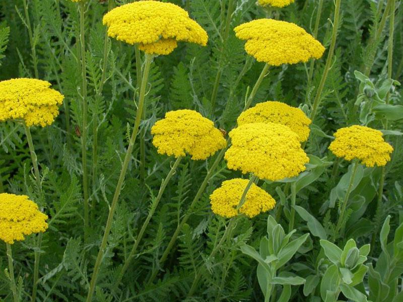 گیاه کامل