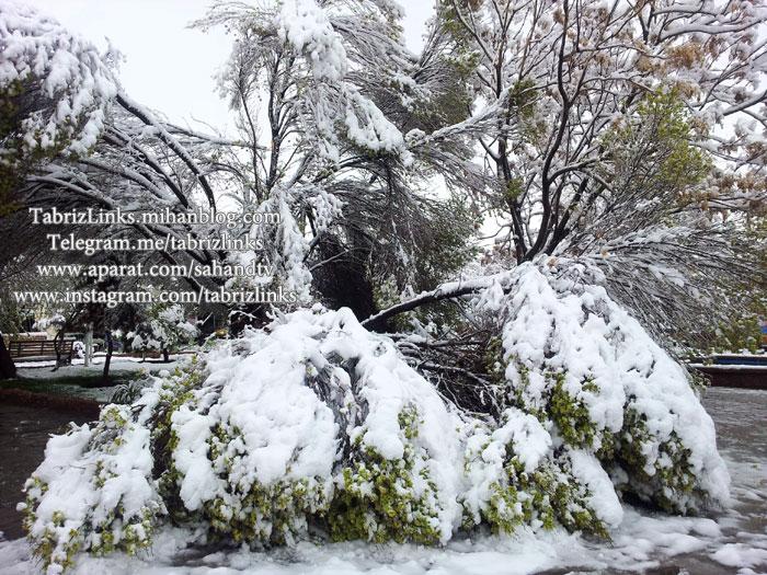شکستن درختان
