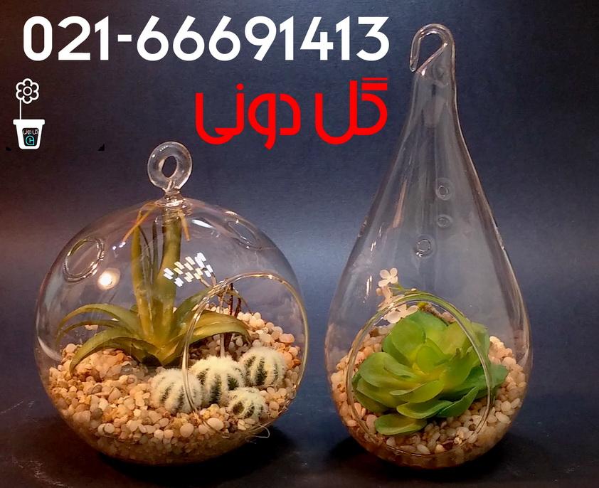 بزرگترین مرکز توزیع انواع کاکتوس،ساکولنت - بلور،تراریوم،گل دونی ...تزئینات گیاهی مصنوعی .