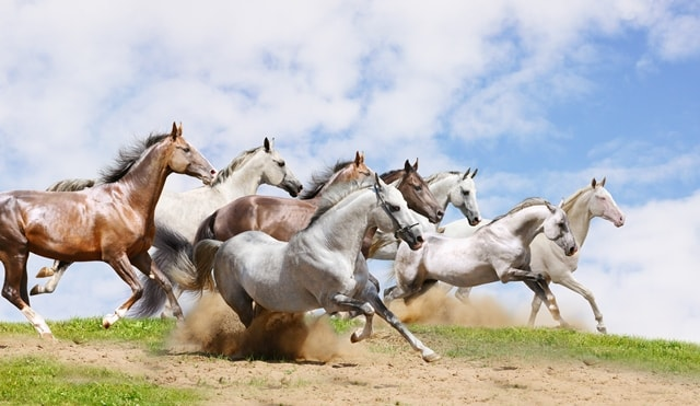تاختن اسب ها