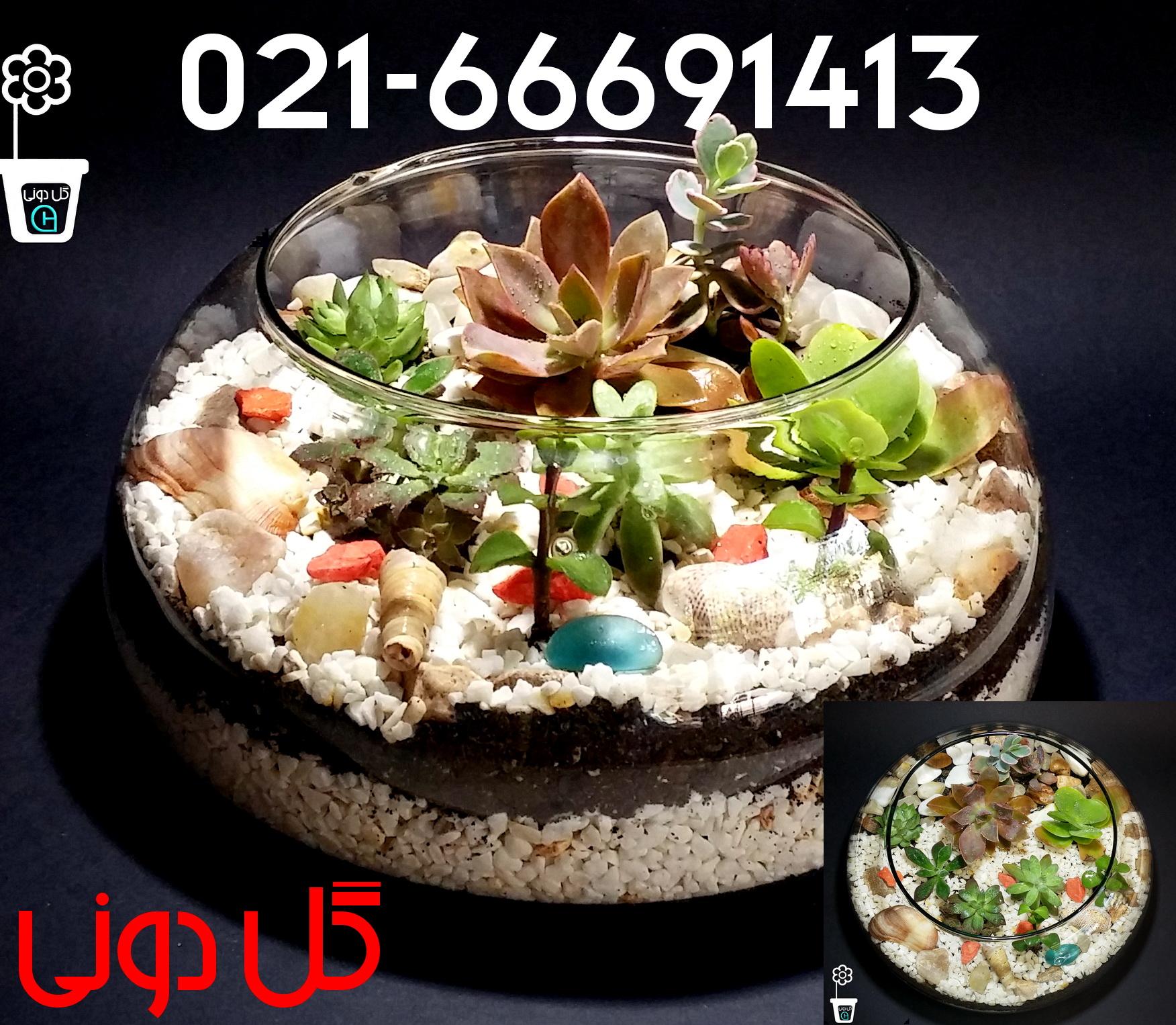 فروشگاه گل دونی 02166691413 - فروش ساکولنتتراریوم ، فروشگاه گل دونی ، کاکتوس، فروش ساکولنت،تزیئنات گیاهی