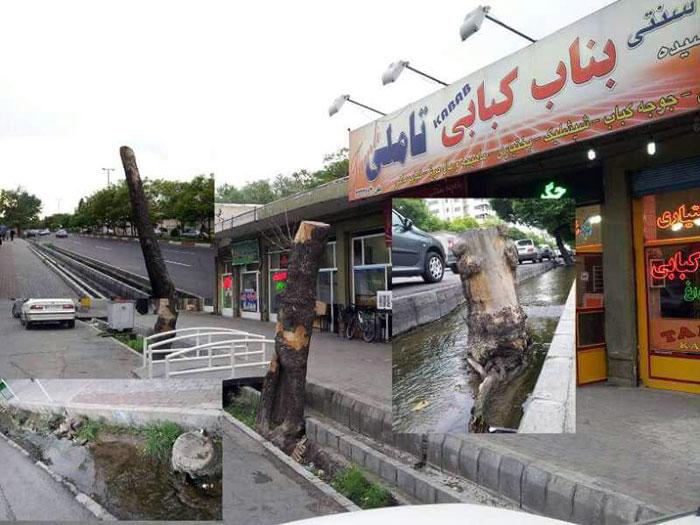 درختان بلوار تبریز