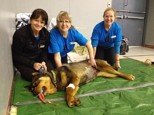 حیوانات در بیمارستان ها و کلینیک تخصصی