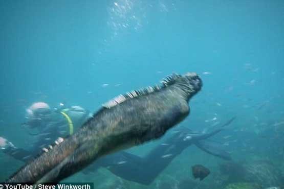 کشف گودزیلا در آبهای اقیانوس آرام  +عکس , جالب و خواندنی