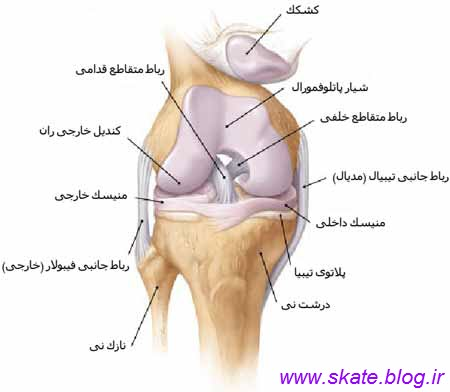 http://s6.picofile.com/file/8247434618/ligament.jpg