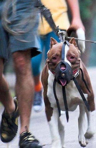 خرید و فروش سگ وحشی آدم خوار در ایران , اجتماعی