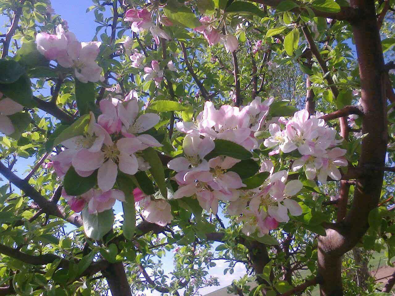 بهار در روستا 1395