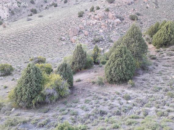 کوه بهار جلوهای منحصربهفرد از هنرنمایی طبیعت / تصاویر