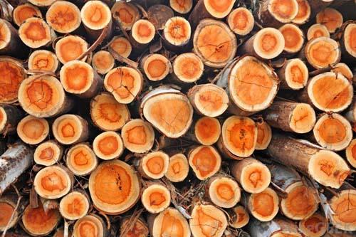 تحقيق « انواع چوب »