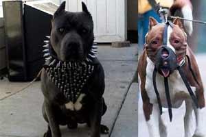 اعدام با سگ برای فرماندهان فراری داعش