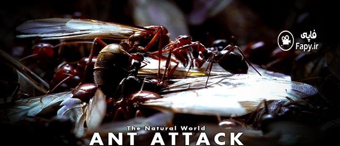 دانلود رایگان مستند Natural World: Ant Attack 2006