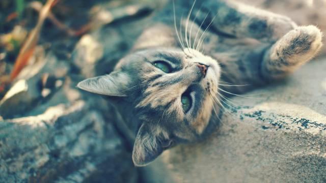 تصاویر گربه