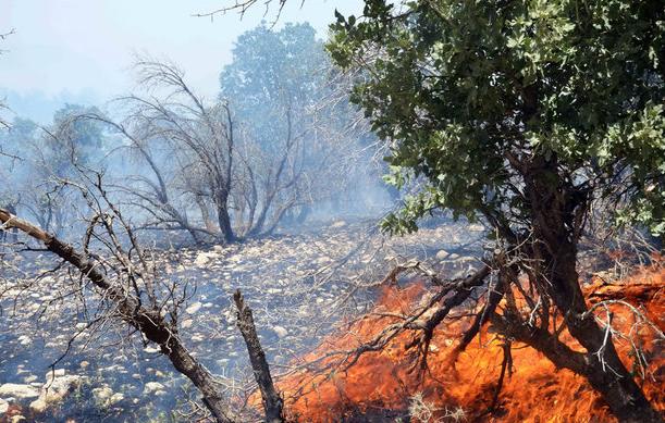 عامل آتشسوزی جنگلهای پاسارگاد دستگیر شد , حوادث