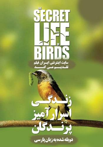 دانلود مستند The Secret Life of Birds دوبله فارسی