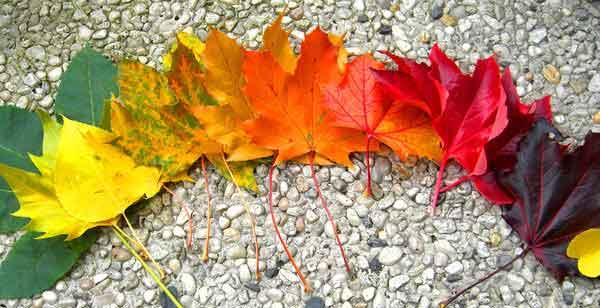 رنگ های آنتوسیانینی