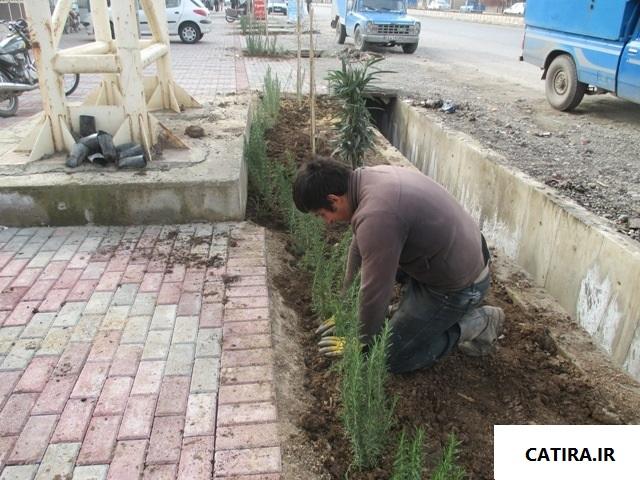 گیاهان دارویی در طراحی فضای سبز