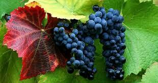 تاثير انگور بر سلامت قلب و عروق