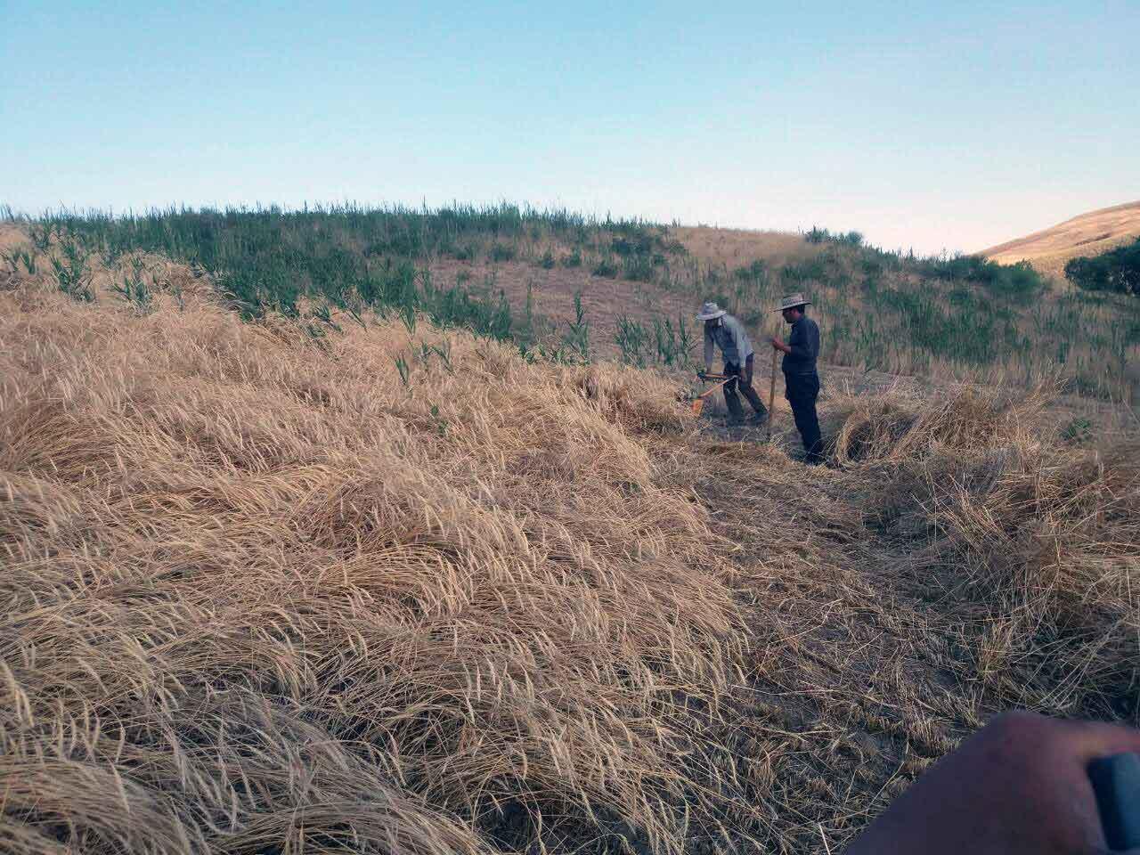 فصل برداشت محصول
