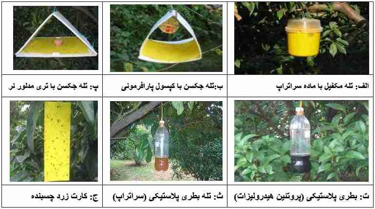 روشهای شکار انبوه مگس میوه مدیترانه